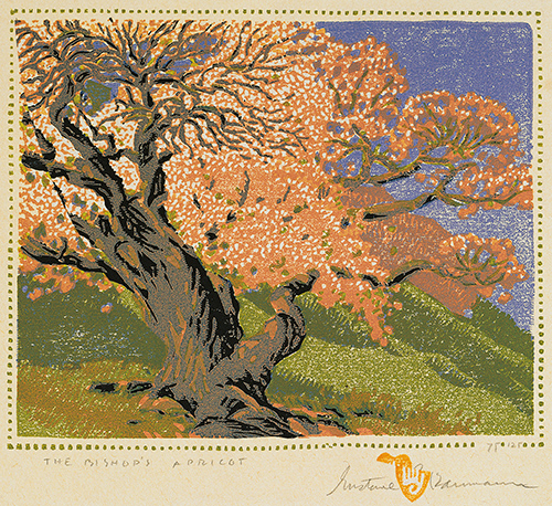 The Bishop's Apricot